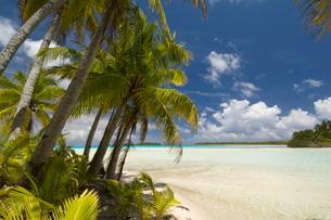 Blue Lagoon, Rangiroa, Tuamotu Archipelago, French Polynesia Islandsの写真素材 [FYI03768236]