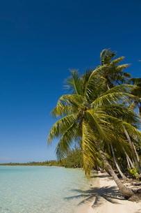 Fakarawa, Tuamotu Archipelago, French Polynesia Islandsの写真素材 [FYI03768255]