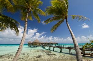 Pearl Beach Resort, Tikehau, Tuamotu Archipelago, French Polynesia Islandsの写真素材 [FYI03768256]