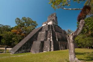 Temple II, Mayan archaeological site, Tikal, Guatemalaの写真素材 [FYI03768399]