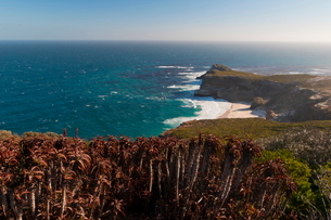 Cape of Good Hope, Cape of Good Hope Nature Reserve, Western Capeの写真素材 [FYI03768520]