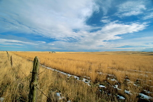 Landscape of the great wide open spaces of the prairies, in the south west of North Dakota'の写真素材 [FYI03768931]