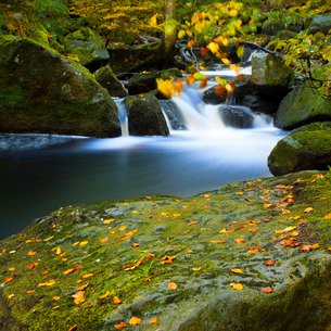 Fast moving stream and autumn leaves at Padley Gorge, Peak District National Park, Derbyshireの写真素材 [FYI03768991]