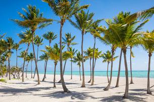 Juanillo Beach, Cap Cana, Punta Cana, Dominican Republic, Caribbeanの写真素材 [FYI03769165]