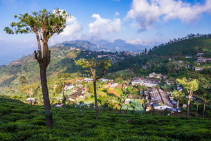 Haputale and a tea estate, Sri Lanka Hill Country, Nuwara Eliya District, Sri Lankaの写真素材 [FYI03769213]