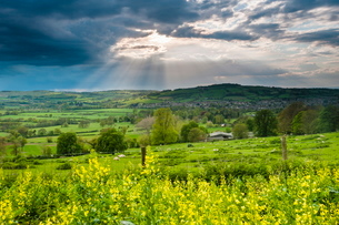 Rape in the Sudely Valley, Winchcombe, The Cotswolds, Gloucestershireの写真素材 [FYI03769288]