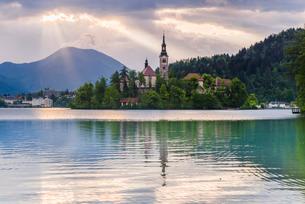 Lake Bled sunrise landscape, showing Lake Bled Church on the Island, Gorenjska Region, Sloveniaの写真素材 [FYI03769335]