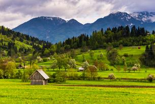 Typical Slovenian landscape between Lake Bled and Lake Bohinj, Triglav National Park, Julian Alps, Sの写真素材 [FYI03769339]