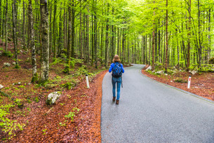 Lake Bohinj, tourist walking in a pine forest, Triglav National Park, Julian Alps, Sloveniaの写真素材 [FYI03769349]