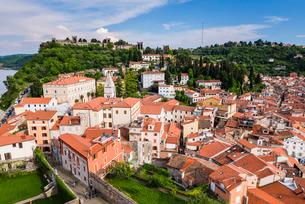 Piran and Piran Town Walls, seen from Church of St. George, Piran, Primorska, Slovenian Istria, Slovの写真素材 [FYI03769378]
