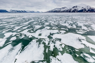 The seasons last remaining shore fast ice in Bellsund, Spitsbergen, Svalbard, Norway, Scandinaviaの写真素材 [FYI03769673]