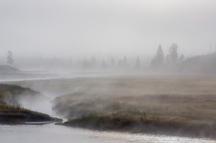 Early morning fog along the Madison River in Yellowstone National Parkの写真素材 [FYI03769758]