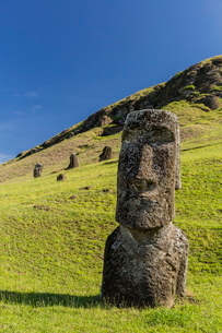 Moai sculptures in various stages of completion at Rano Raraku, the quarry site for all moai on Eastの写真素材 [FYI03770063]