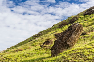Moai sculptures in various stages of completion at Rano Raraku, the quarry site for all moai on Eastの写真素材 [FYI03770064]
