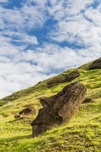 Moai sculptures in various stages of completion at Rano Raraku, the quarry site for all moai on Eastの写真素材 [FYI03770065]