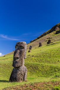 Moai sculptures in various stages of completion at Rano Raraku, the quarry site for all moai on Eastの写真素材 [FYI03770066]
