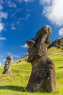 Moai sculptures in various stages of completion at Rano Raraku, the quarry site for all moai on Eastの写真素材 [FYI03770067]