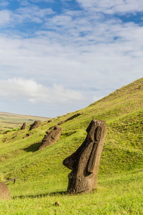 Moai sculptures in various stages of completion at Rano Raraku, the quarry site for all moai on Eastの写真素材 [FYI03770068]