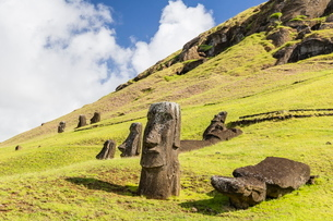 Moai sculptures in various stages of completion at Rano Raraku, the quarry site for all moai on Eastの写真素材 [FYI03770069]