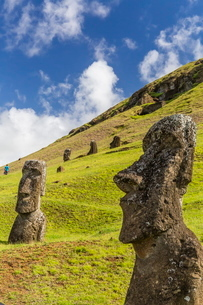 Moai sculptures in various stages of completion at Rano Raraku, the quarry site for all moai on Eastの写真素材 [FYI03770070]
