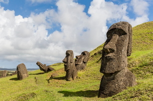 Moai sculptures in various stages of completion at Rano Raraku, the quarry site for all moai on Eastの写真素材 [FYI03770071]