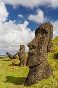 Moai sculptures in various stages of completion at Rano Raraku, the quarry site for all moai, Rapa Nの写真素材 [FYI03770072]