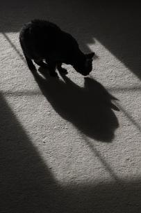 猫の写真素材 [FYI03770079]