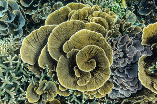 A profusion of hard and soft coral underwater on Siaba Kecil, Komodo Island National Park, Indonesiaの写真素材 [FYI03770215]