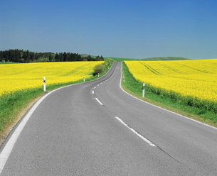 Road through rape fields in spring, Swabian Alb, Baden Wurttembergの写真素材 [FYI03771410]