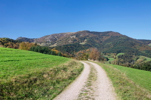 Path leading to Belchen Mountain, Black Forest, Baden Wurttembergの写真素材 [FYI03771509]