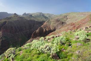 Barranco de Vera Valley, Roque del Sombrero Mountain, near San Sebastian, La Gomera, Canary Islandsの写真素材 [FYI03771891]
