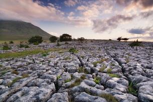 Limestone pavement and Ingleborough mountain, Ingleborough National Nature Reserve, Yorkshire Dales,の写真素材 [FYI03772300]