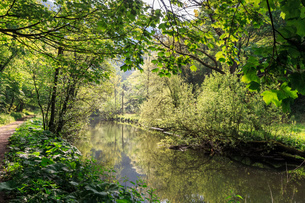 River Wye lined by trees in spring leaf with riverside track, reflections in calm water, Millers Dalの写真素材 [FYI03772609]