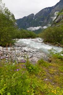 Roaring river, wildflowers and mountains, Lodal Valley near Kjenndalen Glacier, Loen, Norway, Scandiの写真素材 [FYI03772800]