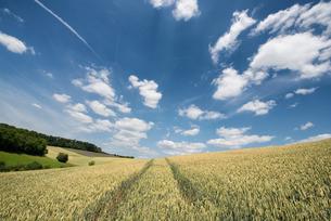 German landscape in summer, Baden-Wurttembergの写真素材 [FYI03772941]