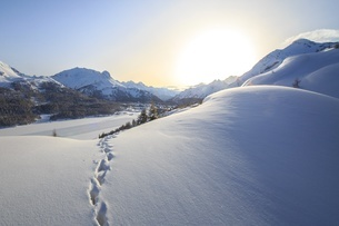 Footprints marching towards the Maloja Pass under a sun veiled by the mist on a cold winter day, Malの写真素材 [FYI03773202]