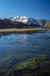 Blooming of eriofori (cotton grass), Levanne mountains. Gran Paradiso National Park, Alpi Graie (Graの写真素材 [FYI03773307]
