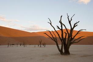 Dead Vlei, Sossusvlei, Namib Desert, Namibiaの写真素材 [FYI03773969]