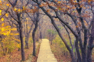 Footpath through mountain forest, Huang Shan (Yellow Mountain) (Mount Huangshan), Anhui Provinceの写真素材 [FYI03774088]