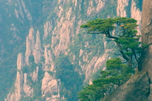 Rocks and pine trees, White Cloud scenic area, Huang Shan (Yellow Mountain), Anhui Provinceの写真素材 [FYI03774093]