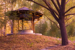 Forest Pavilion, Purple Bamboo Park, Beijingの写真素材 [FYI03774099]