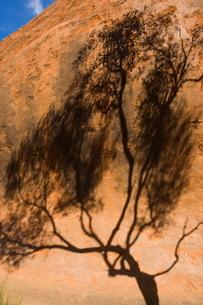 Shadow of tree on Uluru (Ayers Rock), Uluru-Kata Tjuta National Park, Northern Territoryの写真素材 [FYI03774292]