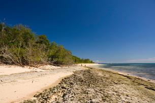 Green Island, Great Barrier Reef, Cairns, Queenslandの写真素材 [FYI03774301]