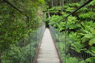 Suspension bridge and rainforest, Tarra Bulga National Park, Victoriaの写真素材 [FYI03774314]