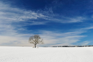 Winter landscape, near Villingen-Schwenningen, Black Forest-Baar (Schwarzwald-Baar) district, Baden-の写真素材 [FYI03774487]
