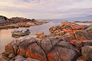 Red lichen on Rocks, Bay of Fires, Bay of Fires Conservation Area, Tasmaniaの写真素材 [FYI03774522]