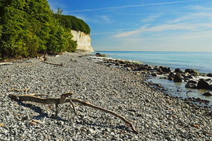 Chalk cliffs, Jasmund National Park, Ruegen Island, Mecklenburg-Vorpommernの写真素材 [FYI03774542]