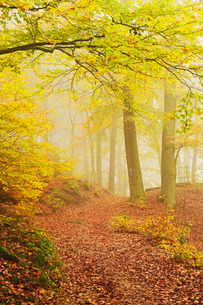 Autumn forest around Karlovy Varyの写真素材 [FYI03774635]