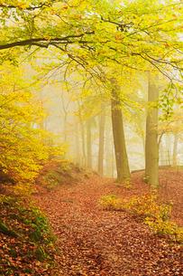 Autumn forest around Karlovy Varyの写真素材 [FYI03774635]