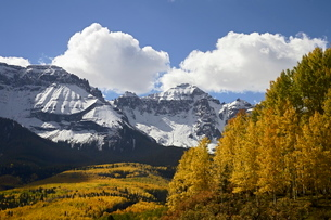 Sneffels Range with fall colors, near Ouray, Colorado'の写真素材 [FYI03774781]
